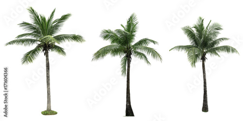 In de dag Palm boom Set of coconut tree isolated on white background used for advertising decorative architecture. Summer and beach concept