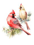 Male and Female Cardinals sitting on the Pine Branch Two Birds Watercolor Hand Painted Christmas Greeting Card Illustration - 171612700