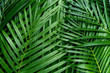 canvas print picture - Palm leaves, greenery background