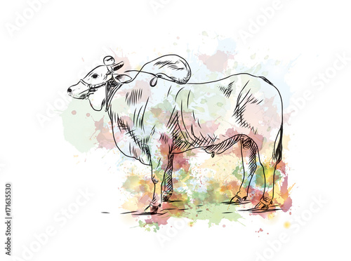 Photo  Watercolor sketch of Farmer Bull in vector illustration.