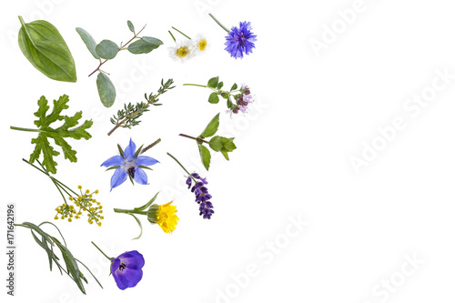 Photo  various fresh herbsand medicinal plants rosemary, ,thyme and peppermint leaves with entral copy space on white background