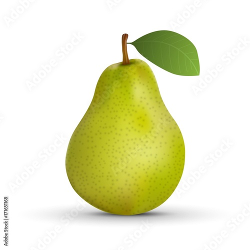 realistic pear isolated on white background. Vector illustration Canvas