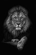 canvas print picture - King Lion