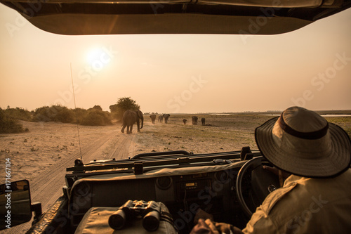 observing Elephants from a safari vehicle, Chobe River, Chobe National Park