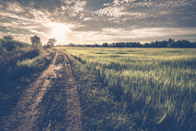 Road Field And Sunset