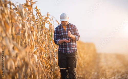 Obraz na płótnie Young farmer examine corn seed in corn fields