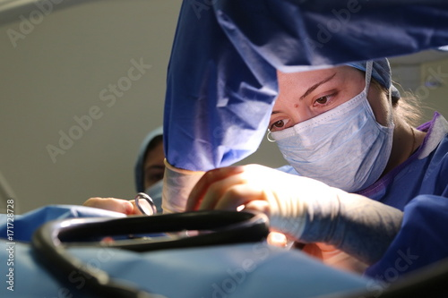 plakat Veterinary surgeon operating in theatre