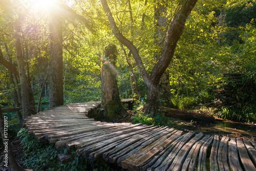 drewniana-sciezka-w-glebi-lasu