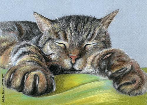 pastellzeichnung-portrait-schlafende-katze