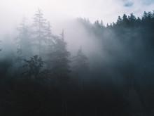 Trees In Fog With Sun Lighting...