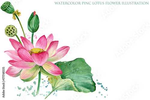 różowa granica lotosu. akwarela ilustracja botaniczna.