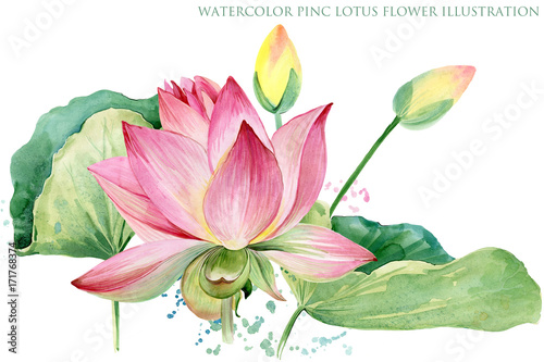 pink lotus border. watercolor botanical illustration.
