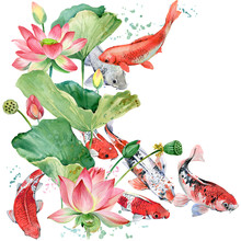 Watercolor Koi Carp And Lotus Flower Illustration.