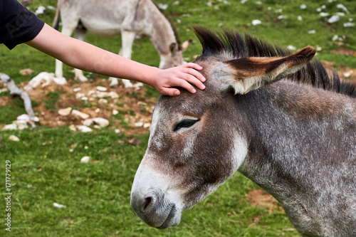 Child caressing a small donkey standing completely calm, with a smile on the muzzle, in Dobratsch Nature Park near Villach in Austria
