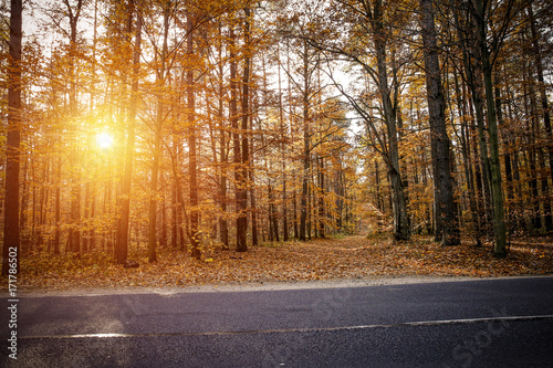 Poster Marron chocolat autumn road