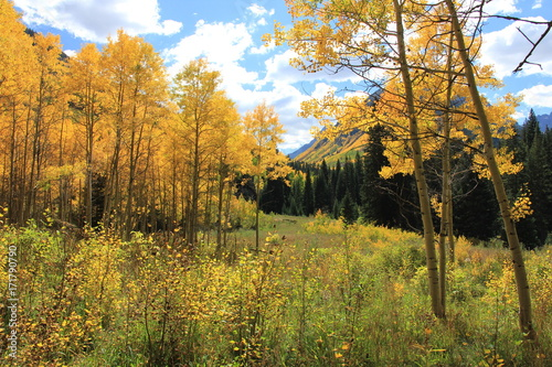 Foto op Plexiglas Panoramafoto s Fall Colors, Aspen Colorado