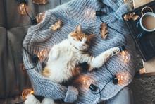 Lazy Cat Sleeping On Woolen Sw...