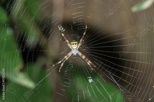 Plakat Pająk na pajęczej sieci