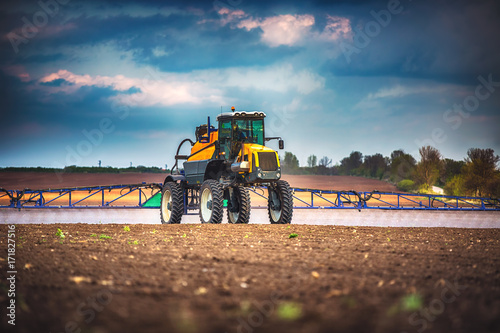 Combine harvester agriculture machine harvesting golden ripe wheat field Obraz na płótnie