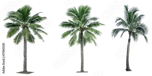Canvas Prints Palm tree Set of coconut tree isolated on white background used for advertising decorative architecture. Summer and beach concept