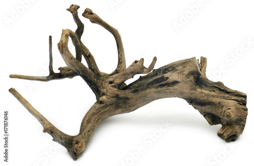 Bogwood Canvas Print