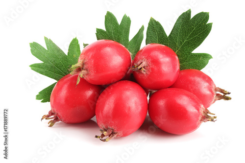 Fototapeta Hawthorn berry with leaf isolated on white background close-up