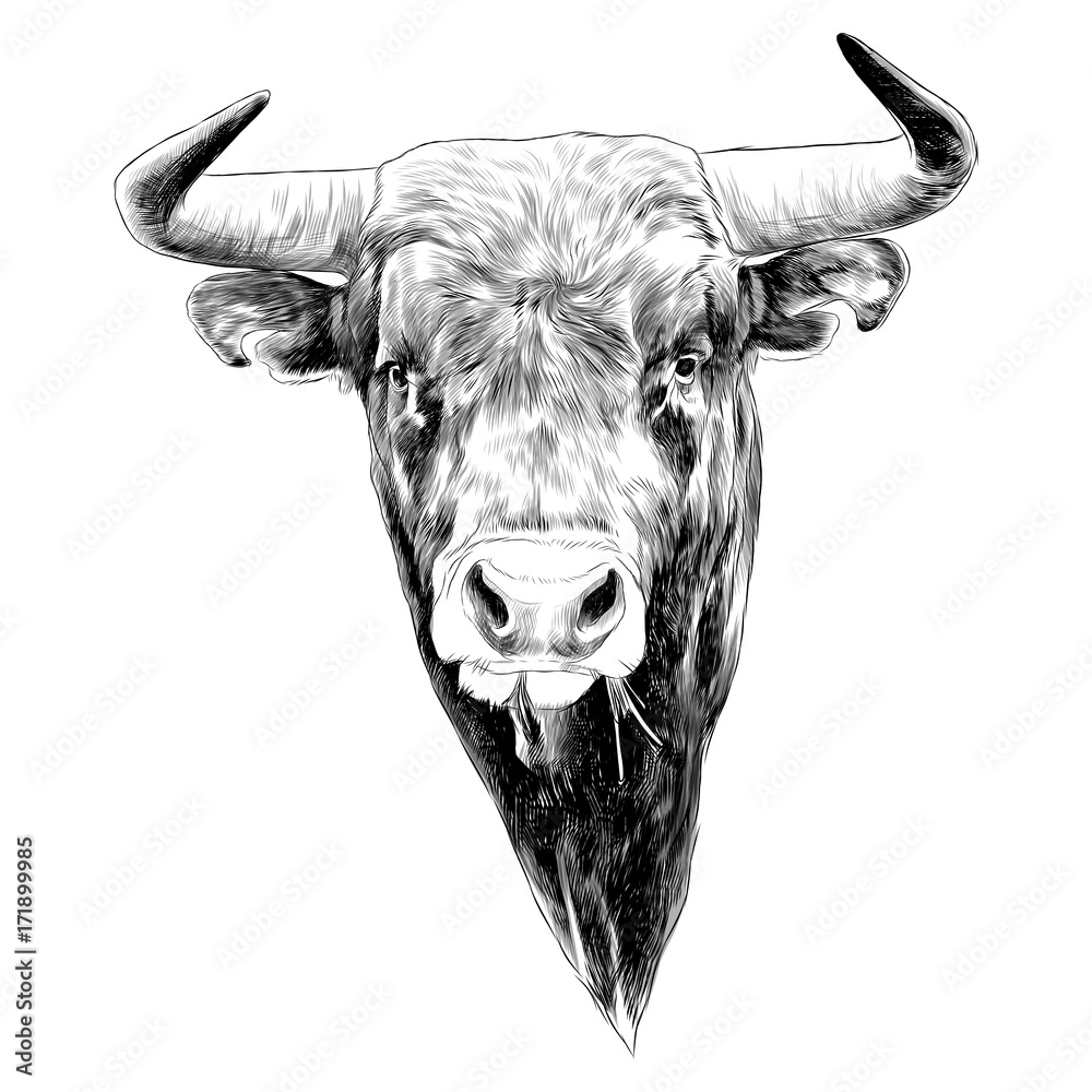 Fototapeta bull sketch vector graphics black and white monochrome figure head