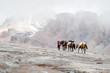 Georgien, Mzcheta-Mtianeti, Stepanzminda, Kazbegtour, auf dem Weg zur Meteostation von 1934, Packpferde auf dem Gletscher