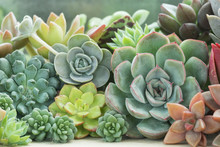 Various Type Of Succulent Flowering House Plants Background