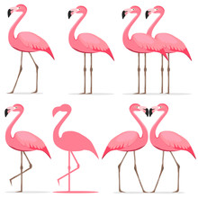 Flamingo, A Set Of Pink Flamingos.