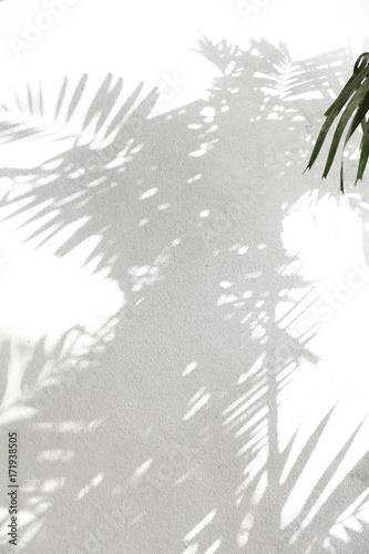 obraz dibond Palmm tree shadows on white wall