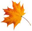 Leinwandbild Motiv autumn leaves.