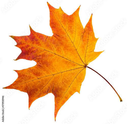 Obraz autumn leaves. - fototapety do salonu