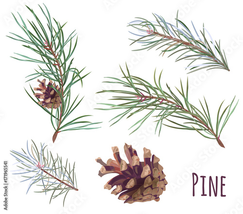 Obraz Collection of pine branches and cones, needles on white background, hand digital draw, watercolor style, decorative botanical illustration for design, Christmas plants, vector - fototapety do salonu