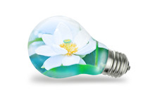 White Lotus Inside Big Jeans In A Light Bulb Isolated On White Background