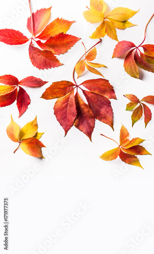 Poster Melon Autumn red orange yellow leaves overhead large vertical colorful group isolated on white background in studio