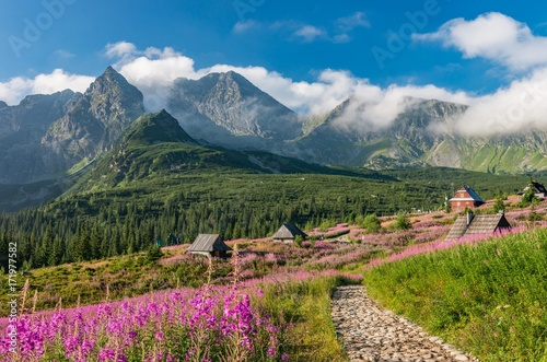 tatry-polski-krajobraz-kolorowe-kwiaty-i-domki-w-dolinie-gasienicowej-hala-gasienicowa-letni-szlak-turystyczny