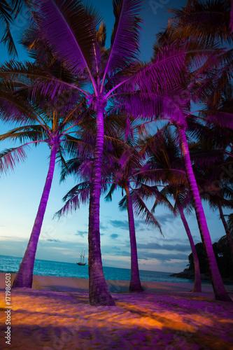 Fototapeta Oświetlone palmy