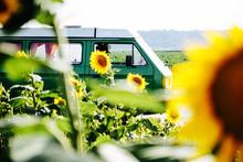 A Camper Van In A Sunflower Field