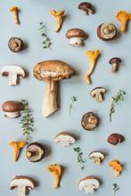 Fresh Penny Bun Mushroom With ...