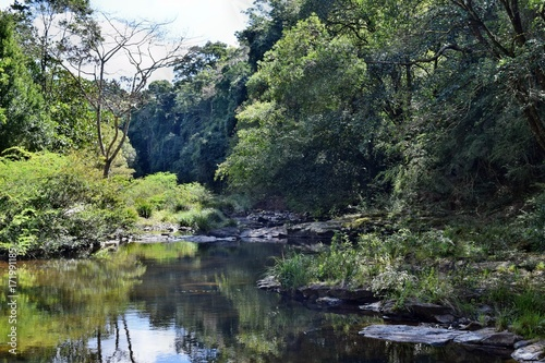 Fotobehang Grijze traf. Beautiful small river in Gardners Falls Maleny