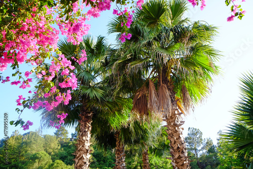 Obraz Beautiful tropical palms in garden - fototapety do salonu