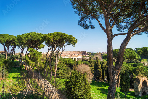Fotografie, Obraz  View of Colosseum from Palatine Hill in Rome, Italy