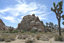 Joshua Tree National Park, Cal...