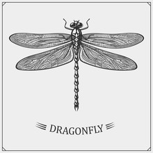 Vector Illustration Of A Dragonfly On Black Background.