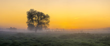 Beautiful, Foggy Morning In The Summer Meadow, Trees And Grass Covered With Mist, Colorful Sky,panorama