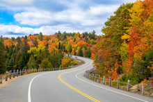A Turning Road With Fall Trees