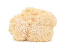 Lion Mane Mushroom Isolated On...