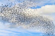 Tornado From Birds In The Sky ...