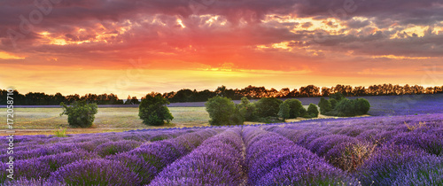 Foto op Canvas Snoeien Twilight lavender field